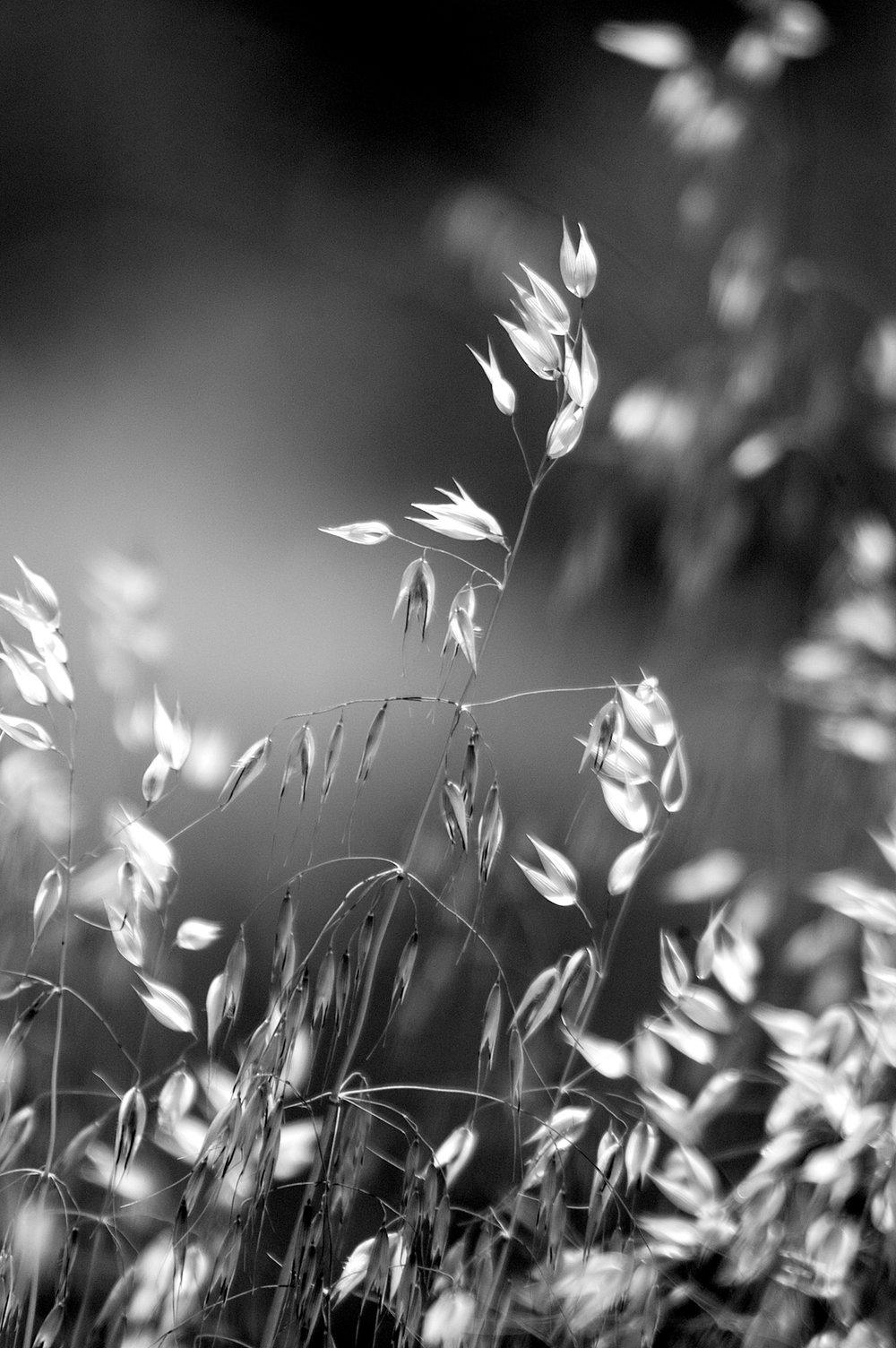 AZ dry grasses.jpg