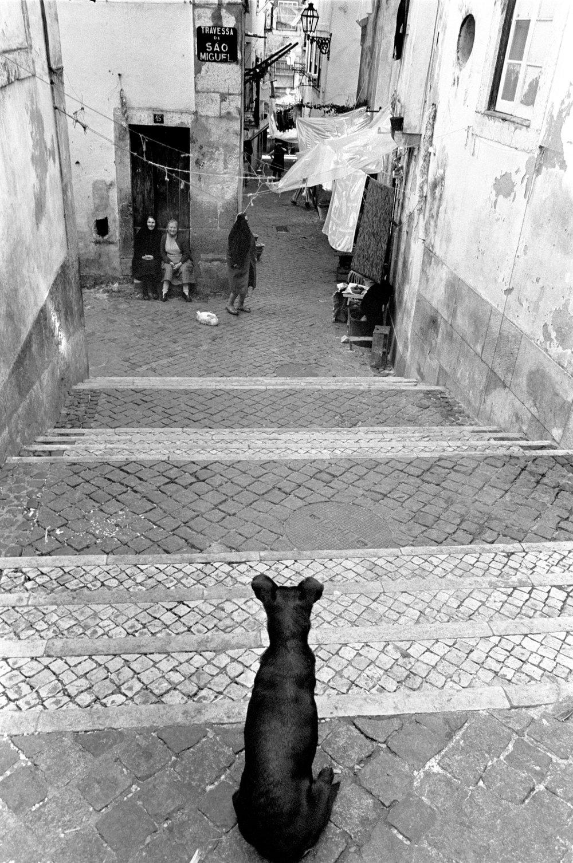 Lisbon dog.jpg