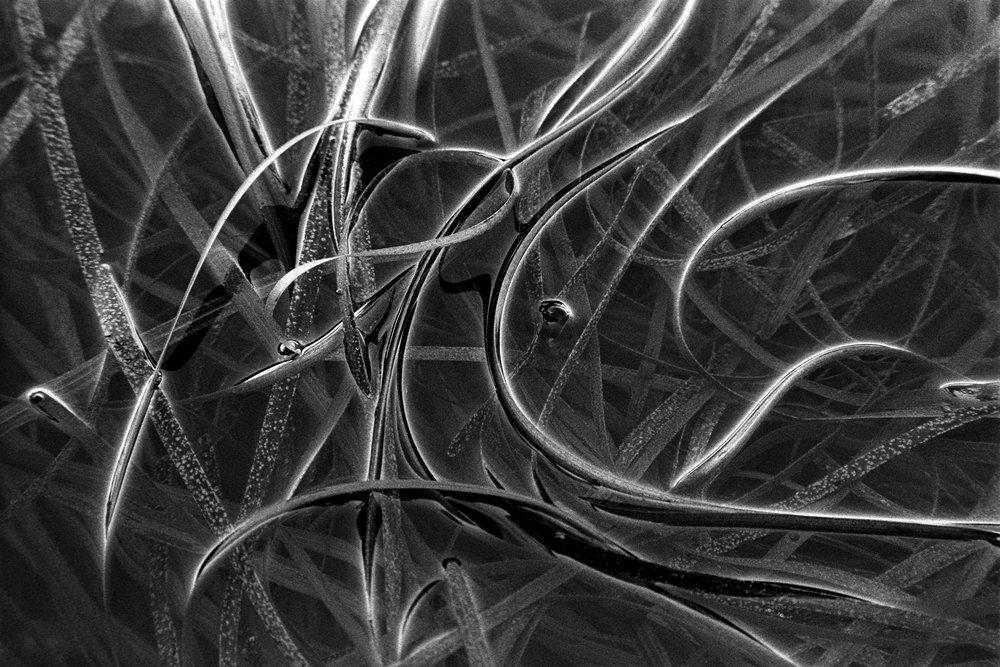 eel grass.jpg
