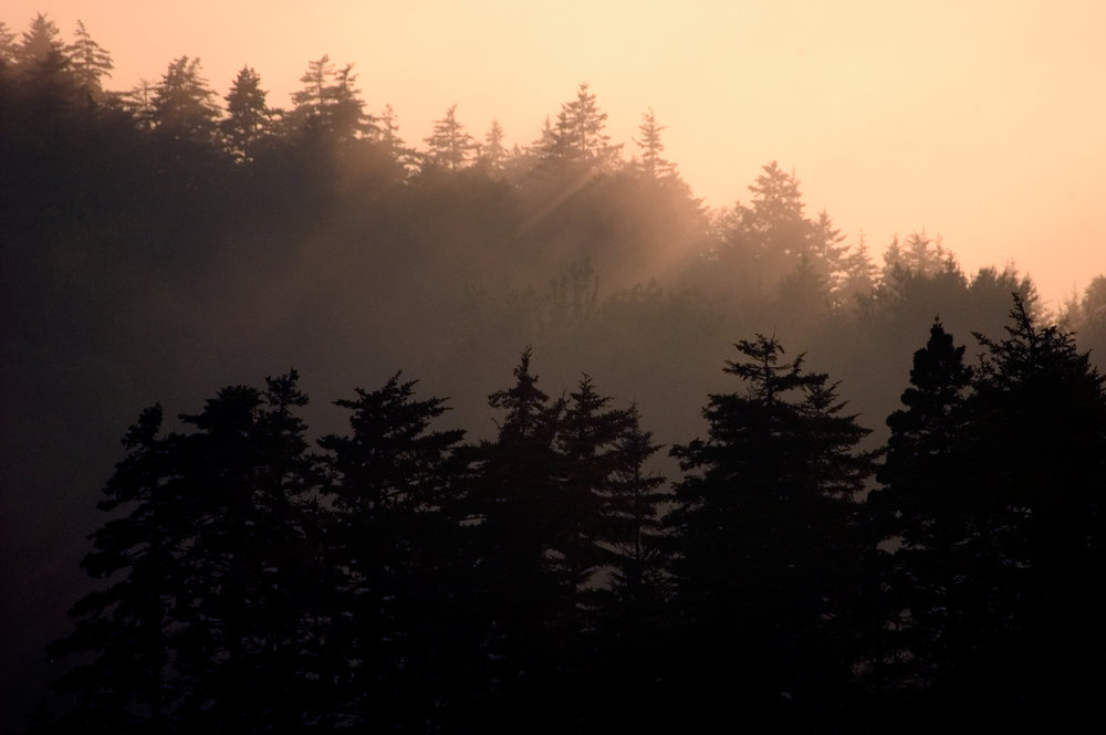 Martin Pt sunset fog