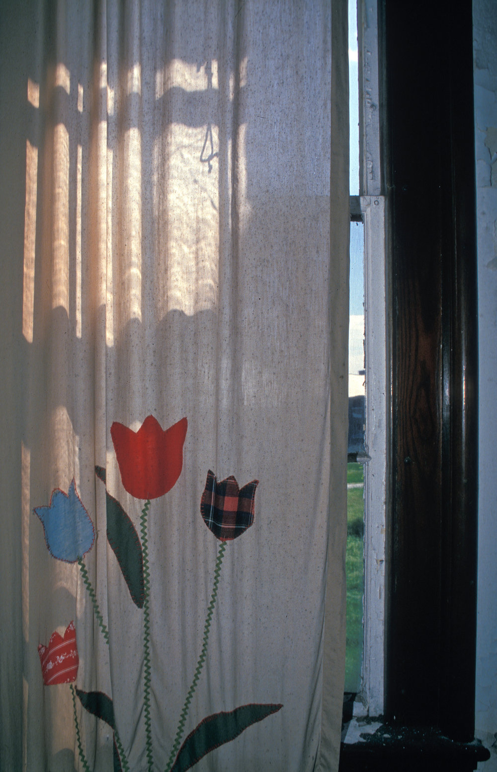tulip curtains.jpg