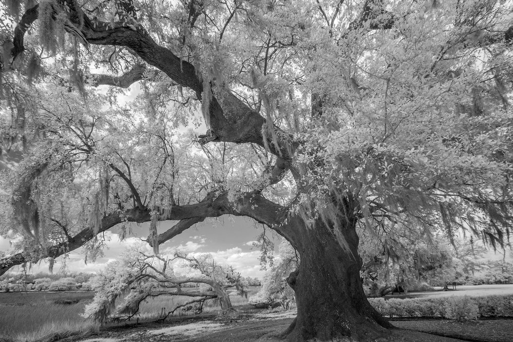 Boone Hall trees #2.jpg