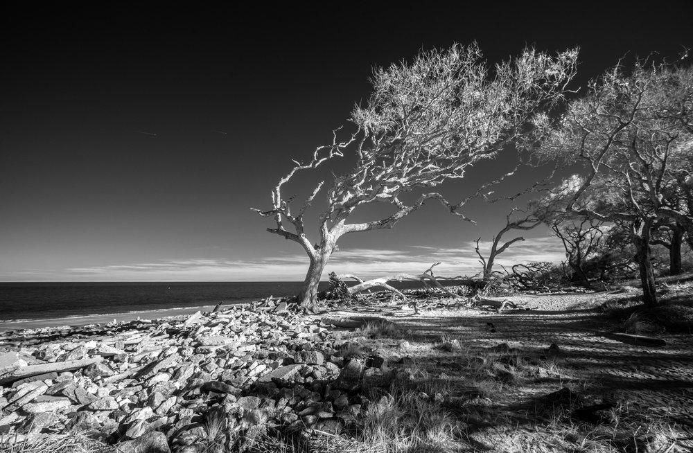 Driftwood Beach Jekyll Is GA