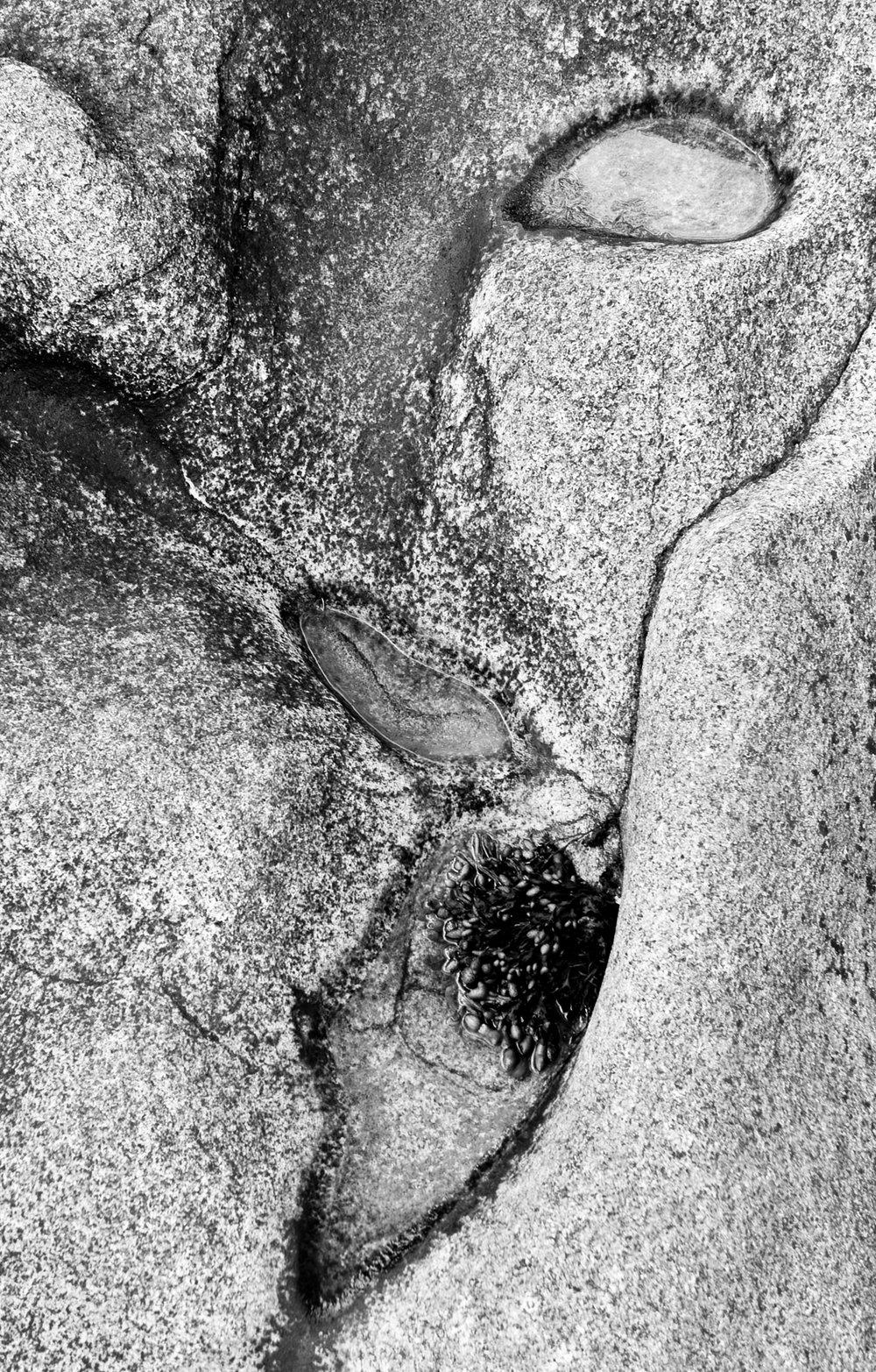 alien fossil