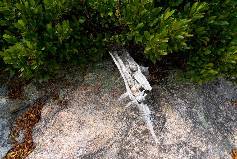 Jim's Island log.jpg