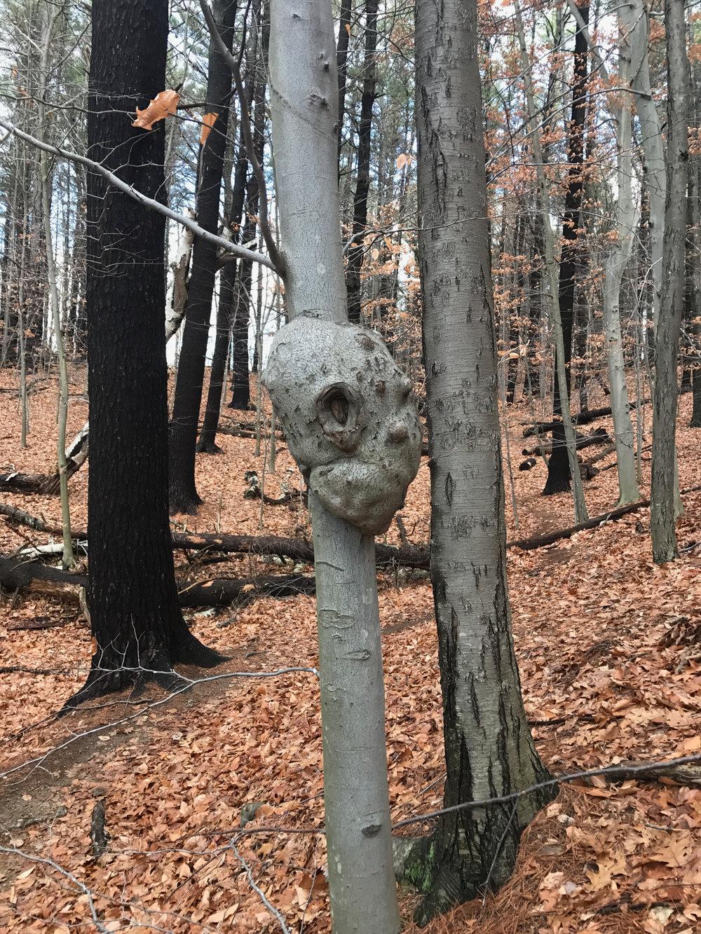 Maudslay woods.jpg