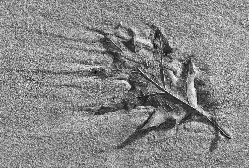 beach leaf.jpg