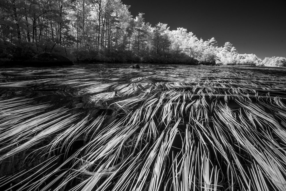 Togus Pond grasses.jpg