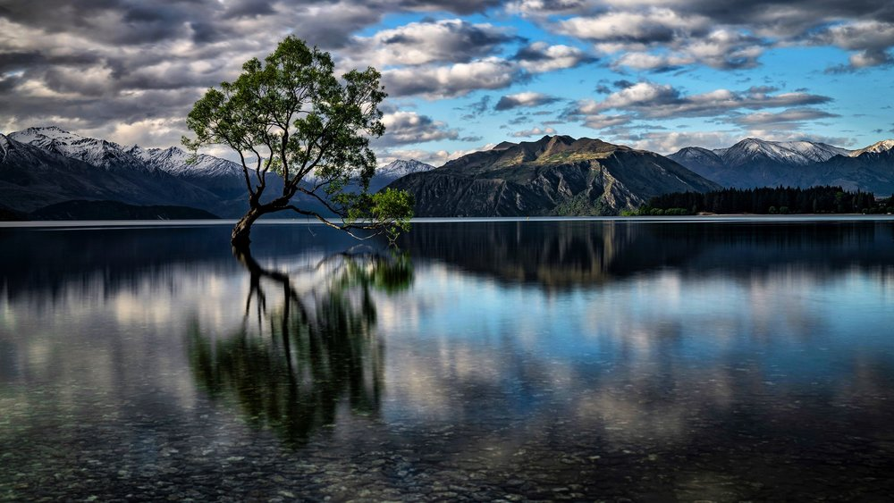 The Wanaka Tree, New Zealand