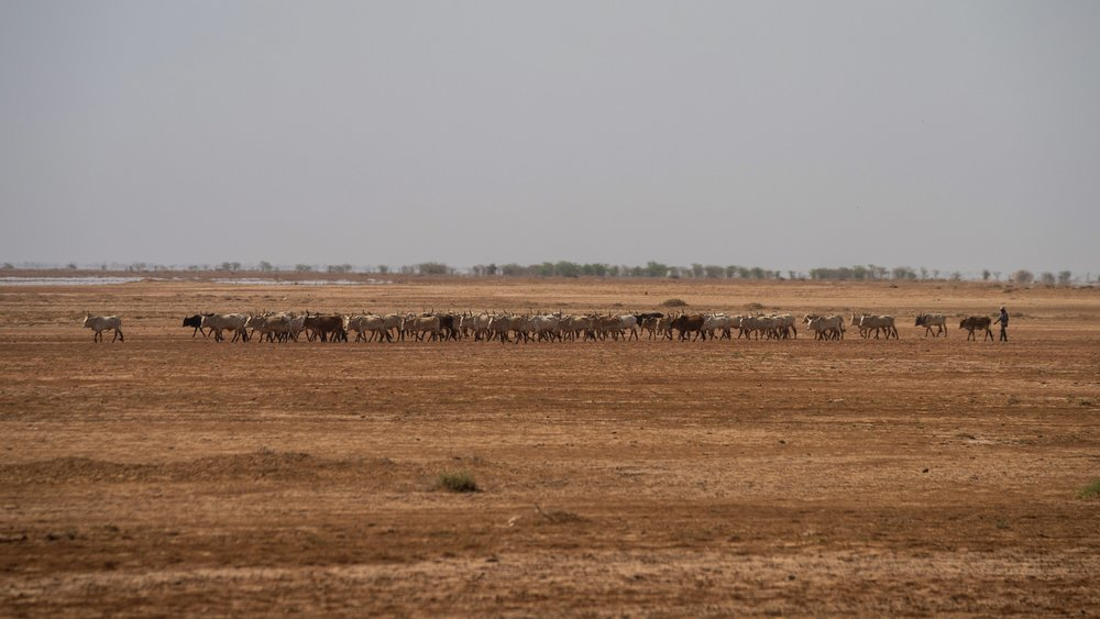 Mauritanian herder