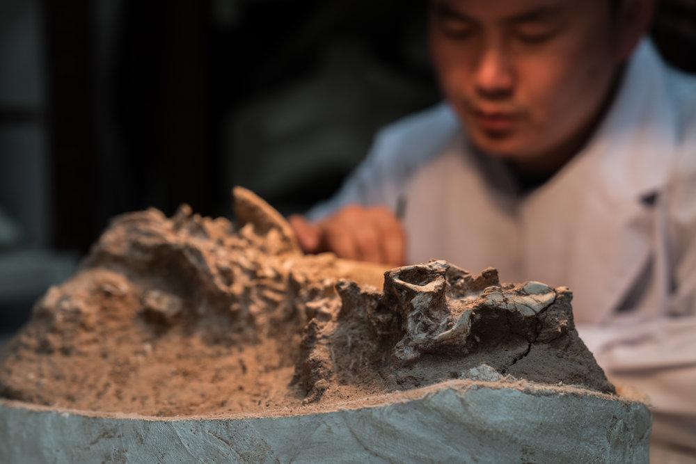 Mongolian Paleontology