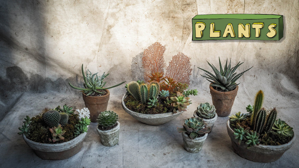 Website Landing Images - Plants.jpg