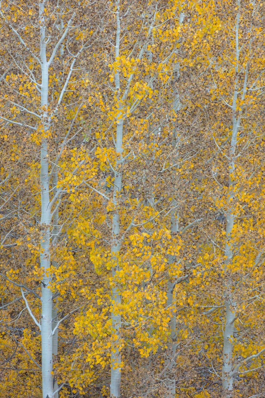 Autumn Jigsaw