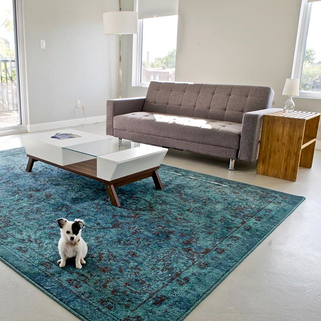 Is your house not a home without a dog? We're pet-friendly! . . . #petfriendly #welovedogs #mustlovedogs #ahouseisnotahomewithoutadog #sitstaydrink #thegrove #stl #stlouis #loft #loftlife #urbanliving #citymouse #10minutesfromanywhere #makeityours #modern #contemporary #style