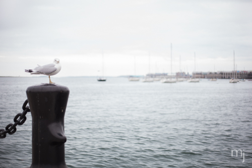 Boston-seaport-Engagement-seagull-boston-wedding-photographer-photo