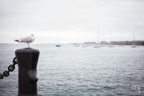 Boston-seaport-Engagement-seagull-boston-wedding-photographer-photo