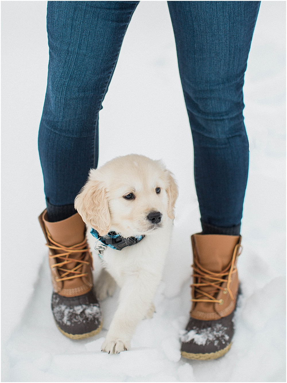 Grady_golden_retriever_puppy_8_eight_weeks_7_seven_wakefield_new_deanna_tyler_meredith_jane_photography_photo_0007.jpg