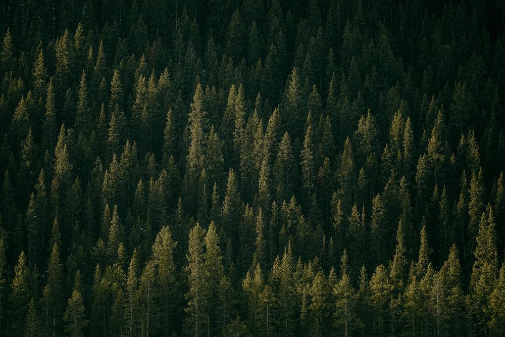 Banff_Canada-43.jpg