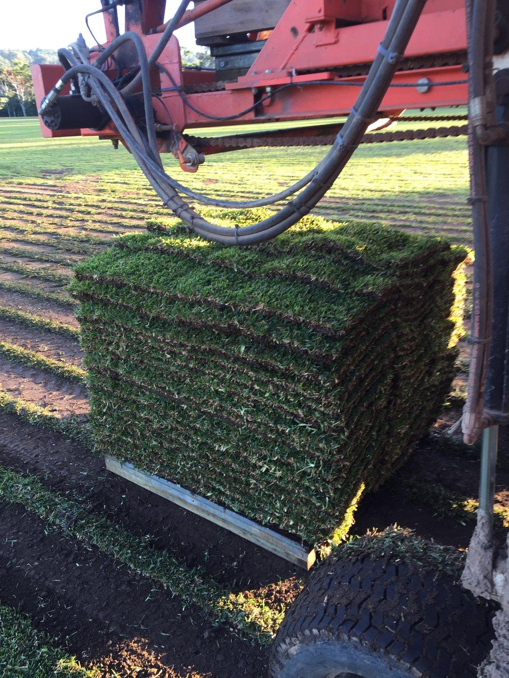 bigstock-Pile-Of-Grass-Rolls-4437941.jpg