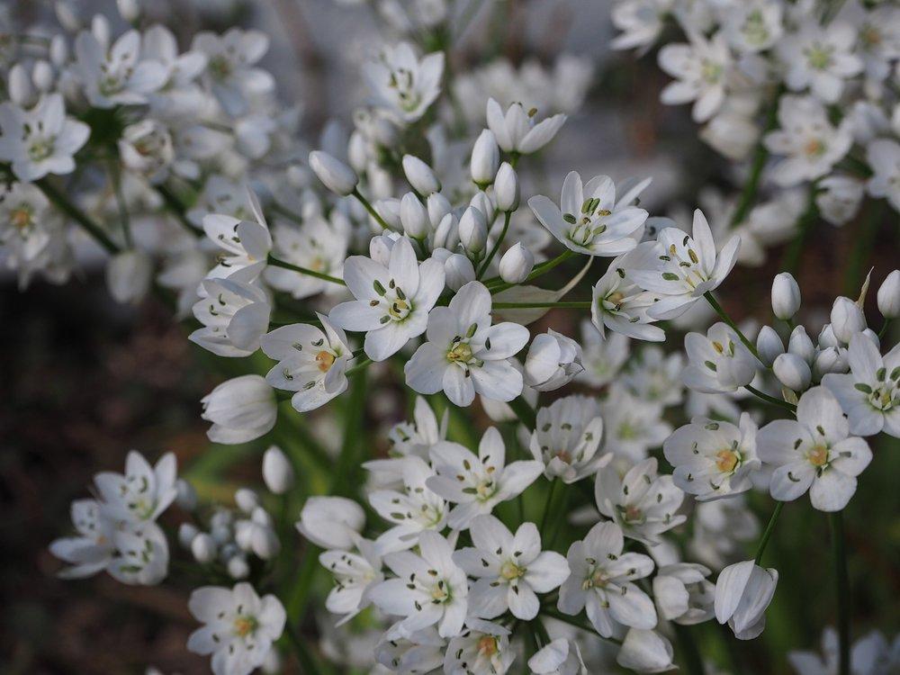 Irine-flowers.jpg