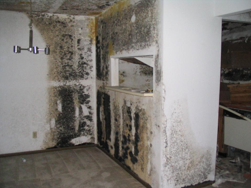 Mold found during home inspection |  Houston Home Inspection Services | Home Inspector | Commercial Property Inspector | Commercial Building Inspection | Free Thermal Imaging | Real Estate Inspector | ATEX Inspects LLC