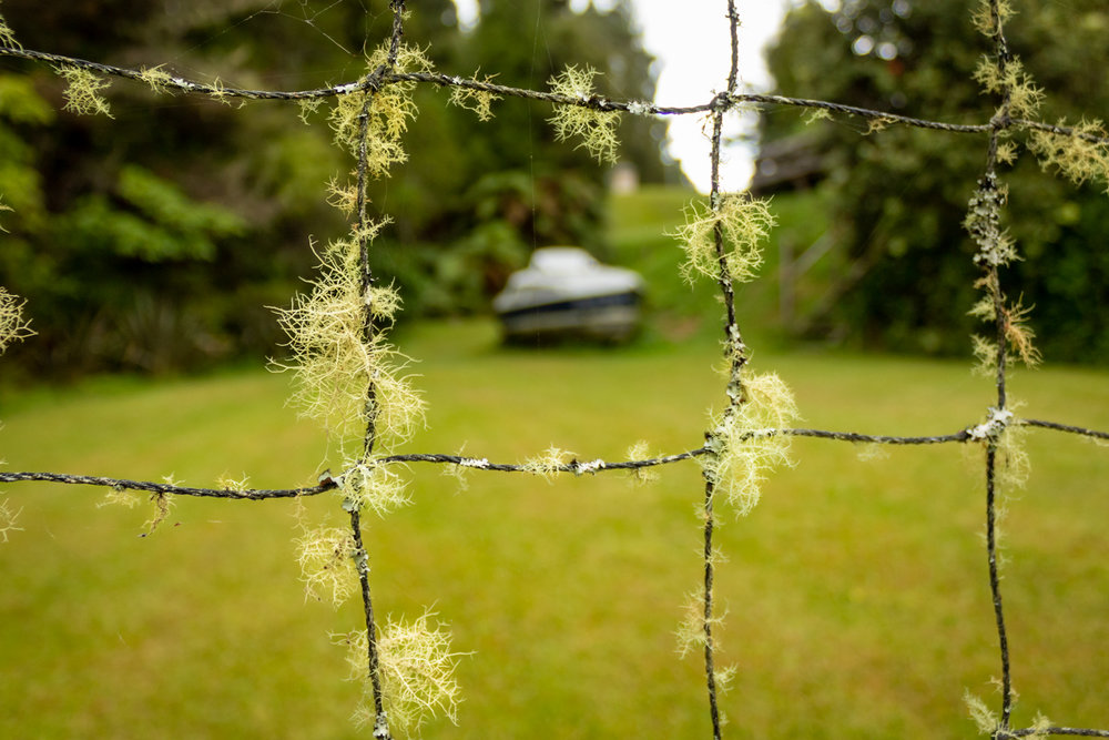 CRH_2018_NZ_D3_THE_COROMANDEL_3978.jpg