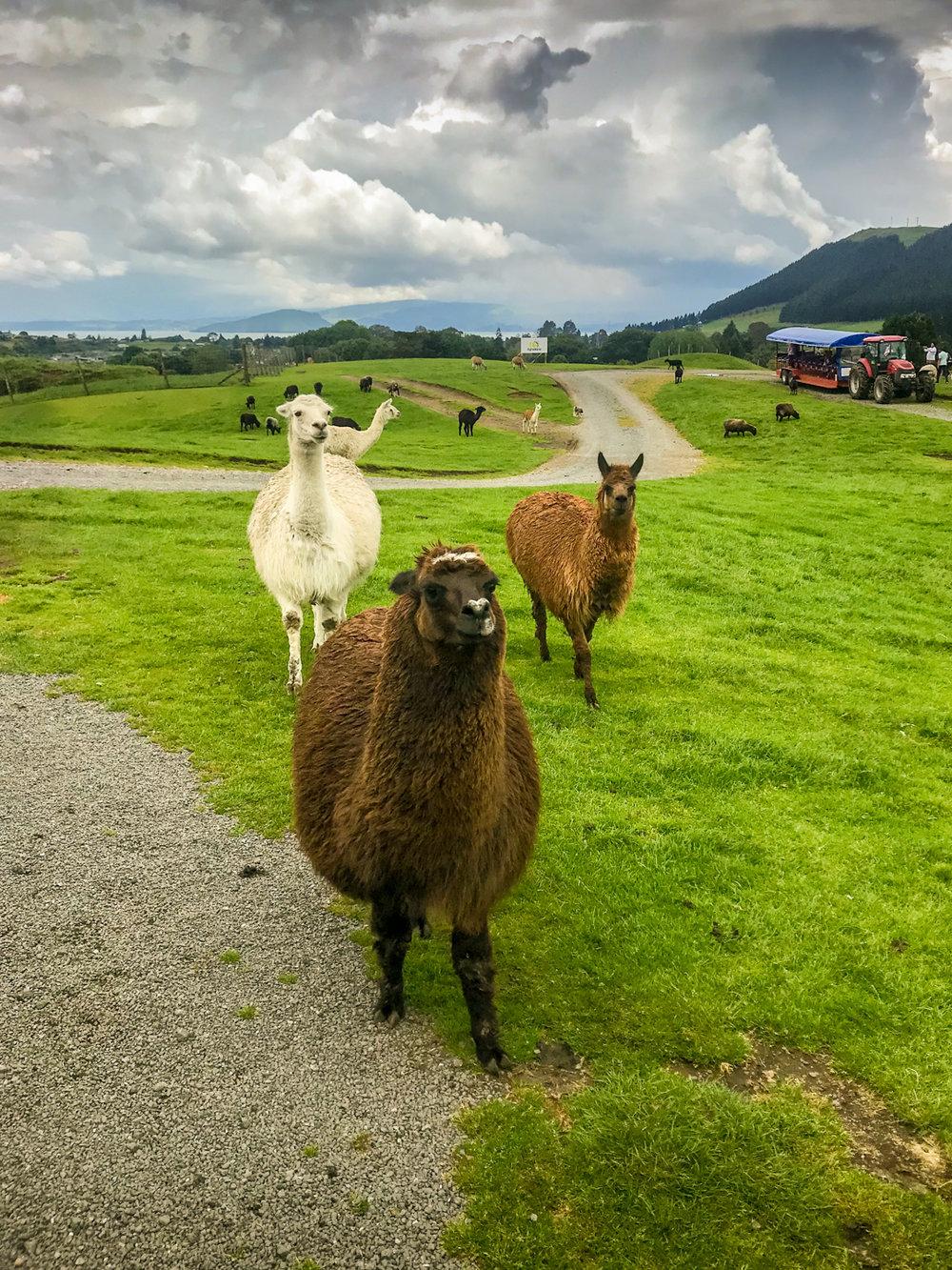 CRH_2018_NZ-DAY_06-ROTORUA_19.jpg
