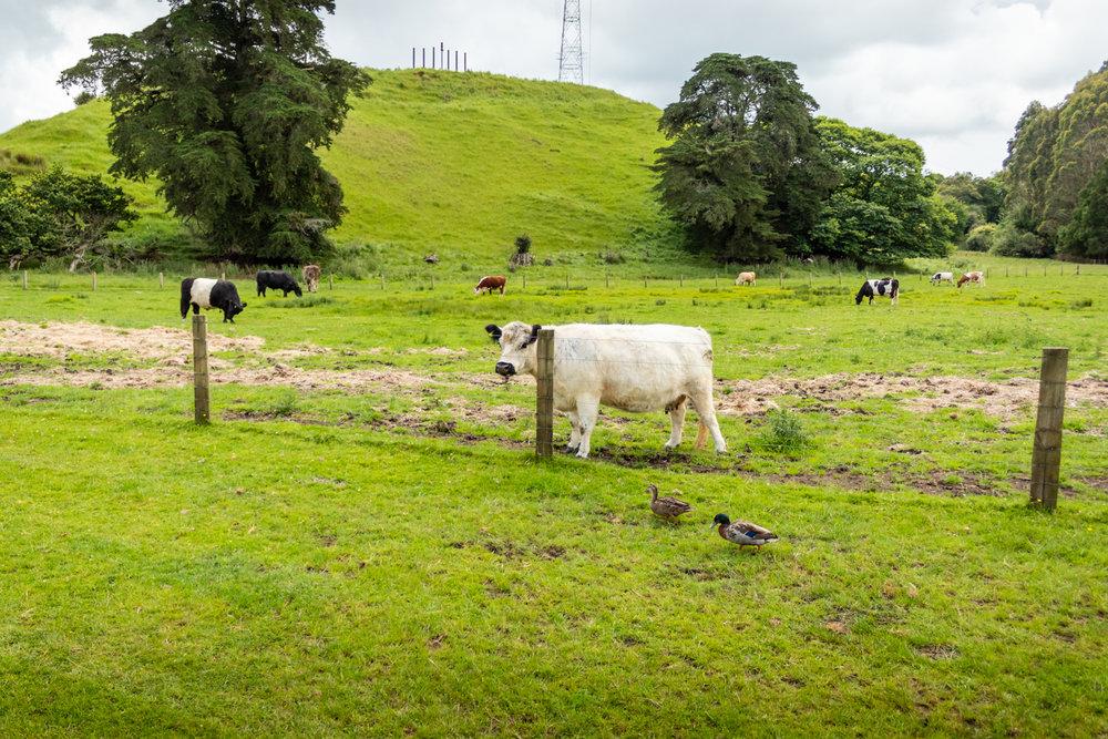 CRH_2018_NZ-DAY_06-ROTORUA_4140.jpg