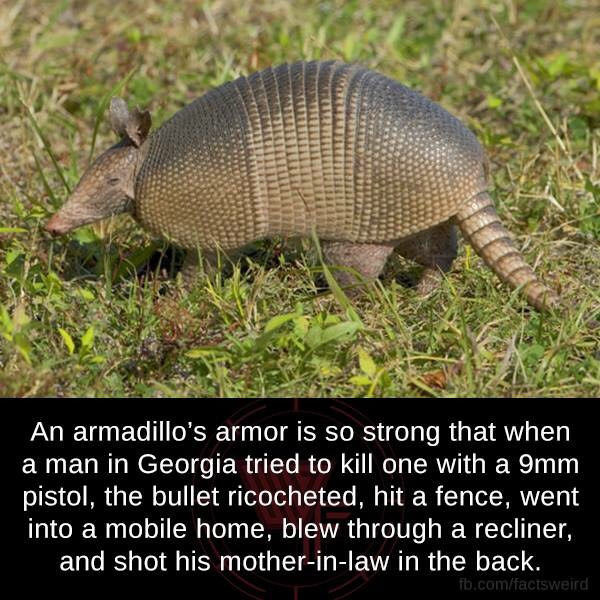 dont fuck with an armadillo