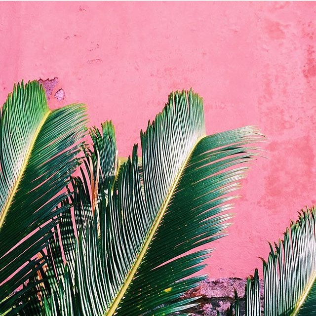 Tropical inspiration from @justinablakeney