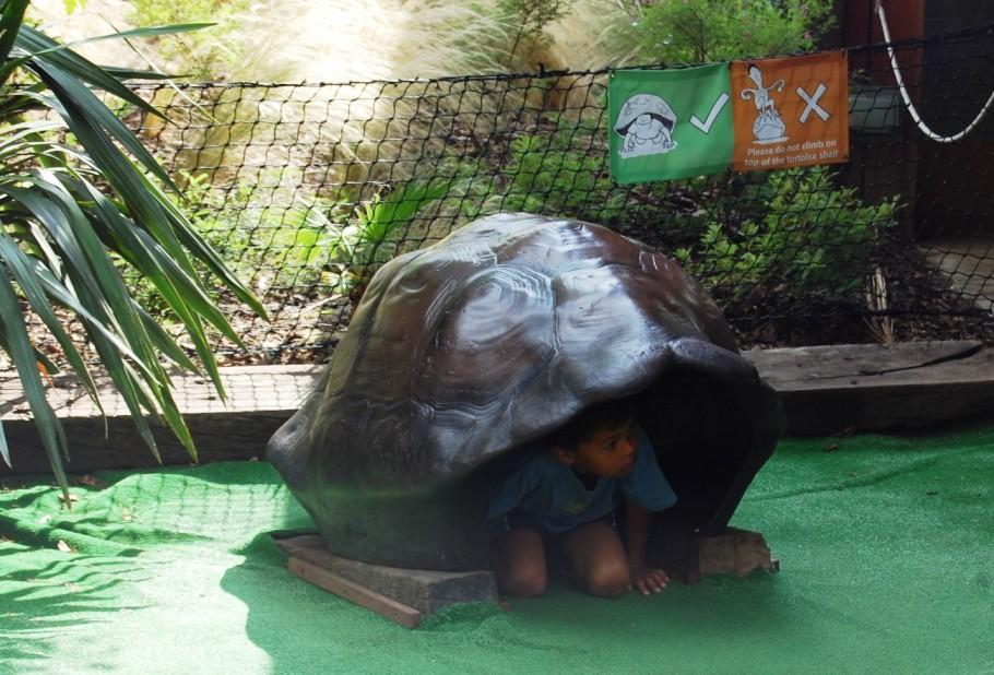 giant tortoises shell.JPG