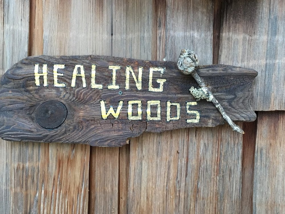 """Healing Woods""                                                                      NFS  Amid much teasing from my husband and children, I named our primitive cabin on Whitefish Lake in Wisconsin, HEALING WOODS. Why? I find when I am in the woods and can hear the leaves clattering and whispering in the breeze, the birds singing raucously, the watercaressing the shore, my heart feels at peace.  Quite honestly, that is not my average state-of-mind. My brain activity could be likened to a squirrel jumping from tree to tree and branch to branch and forgetting where I started."
