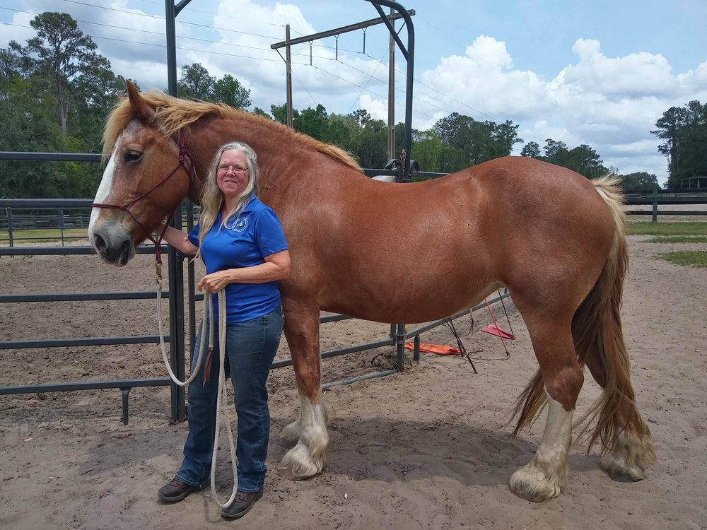 Meet Rose! She is a 10 year old Belgian Draft who is about to spend 4 months in Horse and Human Development at B-C Foundation Station free of charge.  After her training, which is a collaboration between UF and B-C, Rose's owner is selling her to HOPE for $1000.