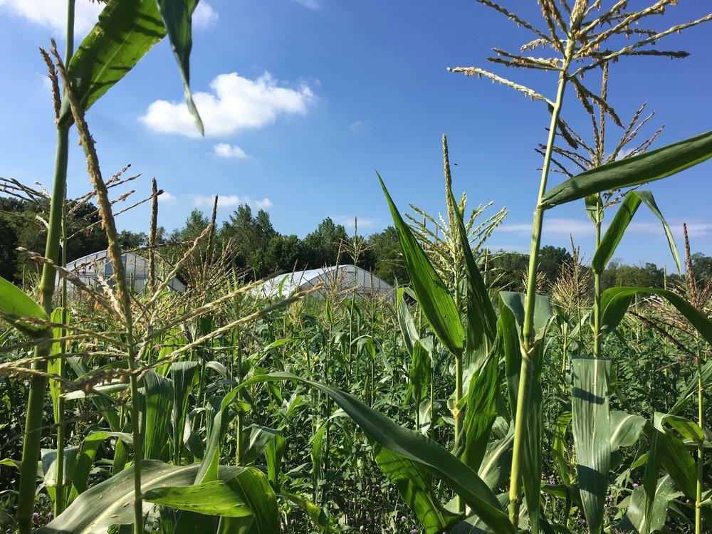 Columbus Organic Farm