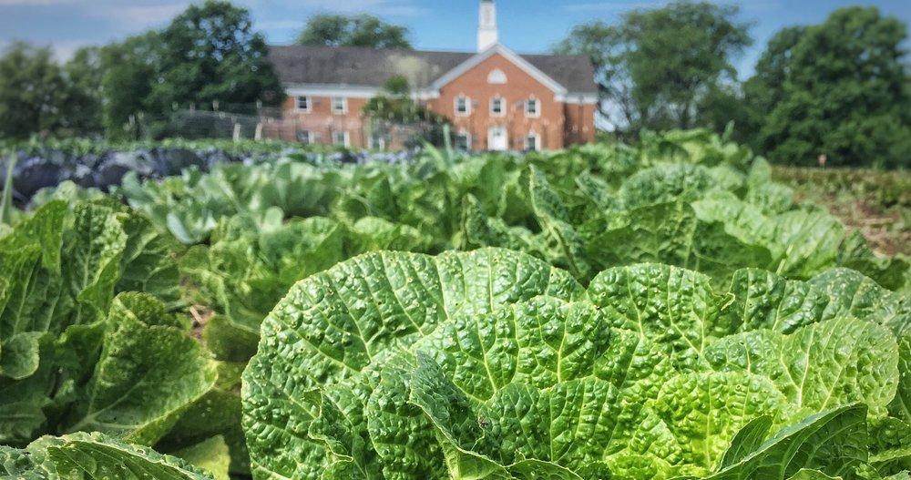 local farm columbus ohio