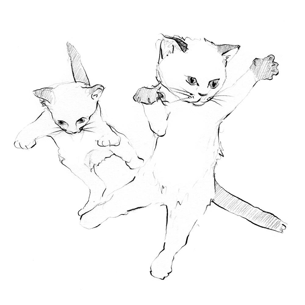 jumpingcats.png
