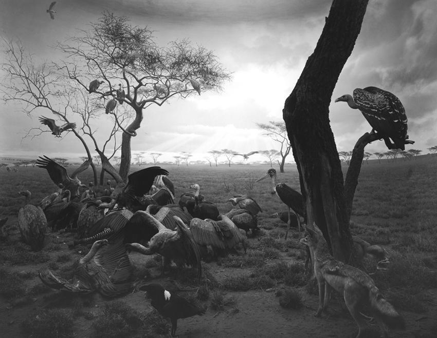 Hyena - Jackal - Vulture, 1976