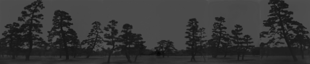 pine tree left Set_line retouched.png