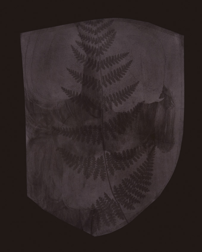 Buckler Fern, March 6, 1839 or Earlier,  2008