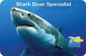 a PADI shark diver specialist certification card in roatan honduras, the only shop teaching about sharks.