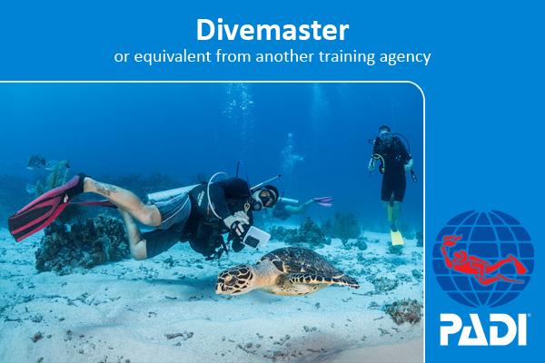 PADI scuba diving advanced open water with coconut tree divers in roatan honduras caribbean