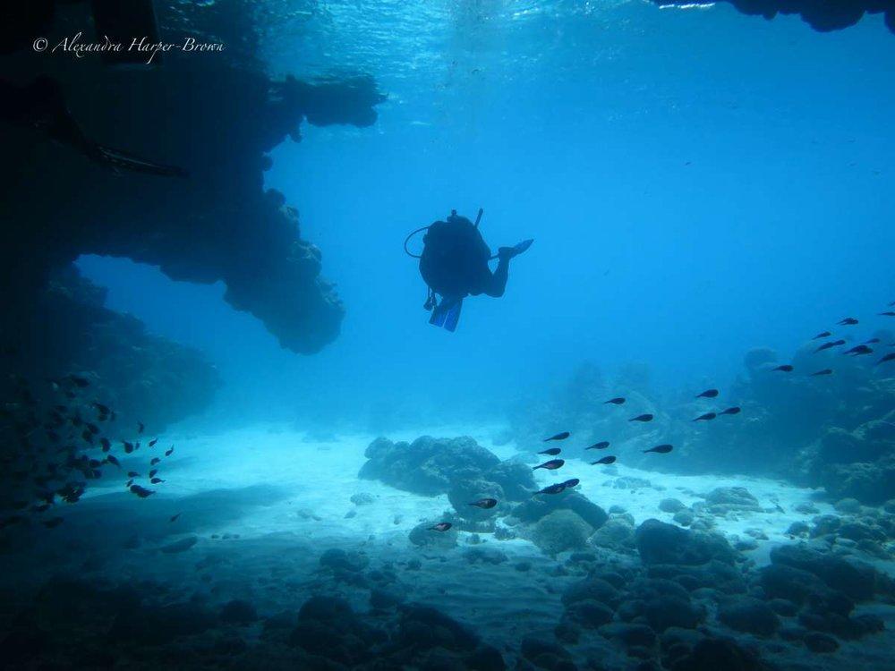 """Un plongeur passe à travers une grotte à """"Dolphins Den"""" à Polly Tilly."""