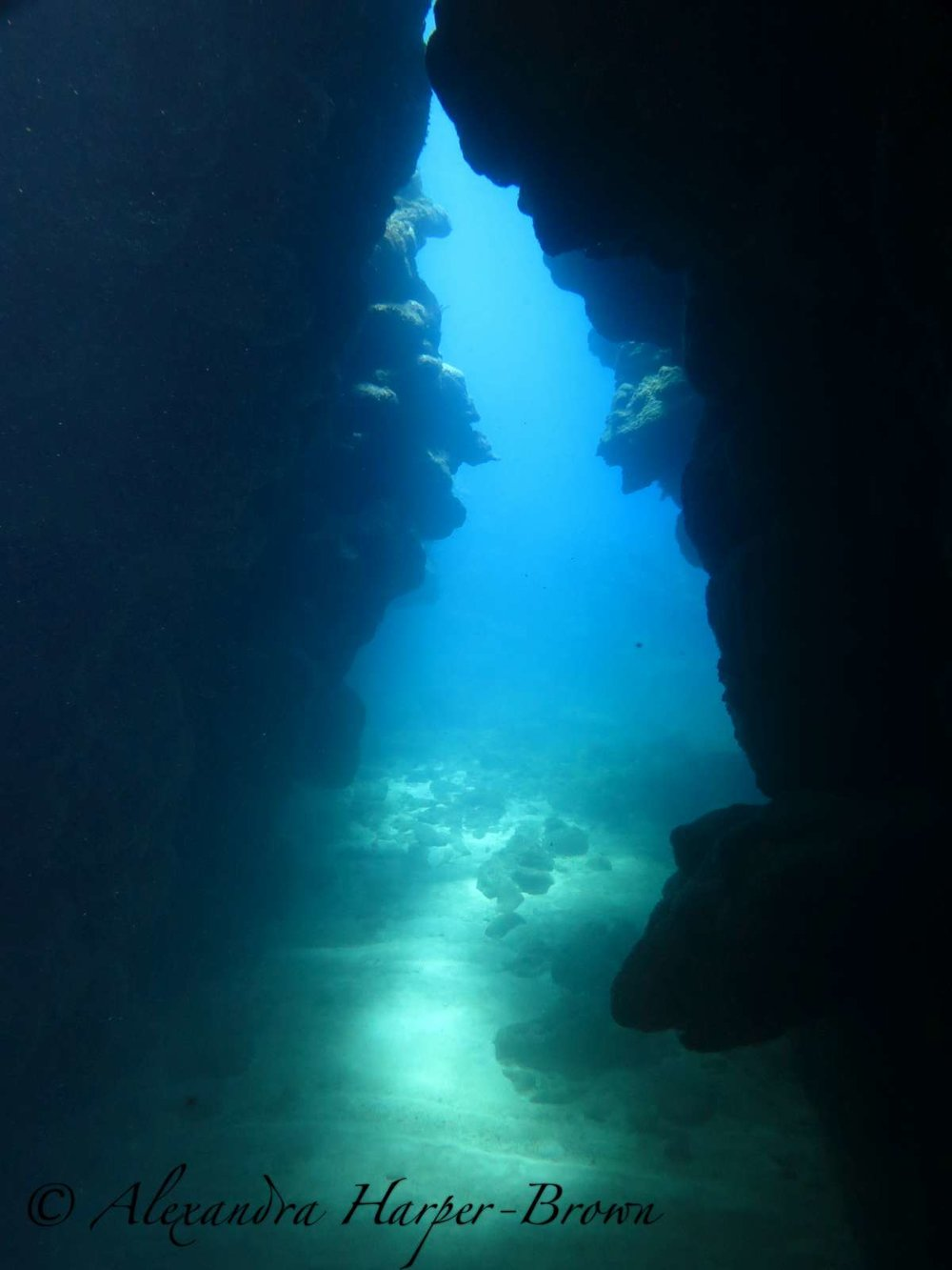 dive site hole in the wall in roatan, hondras, scuba diving in the cave.