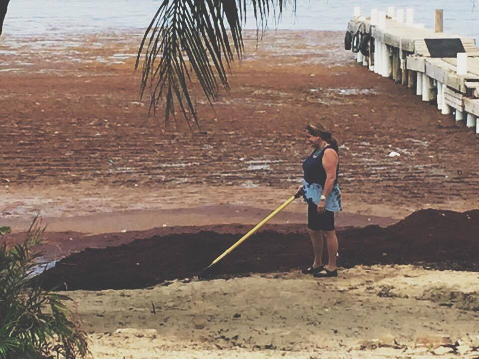 Resident Hero, Gay, raking mounds of sargassum a several years ago. Photo generously shared by Casey Pook via Facebook.