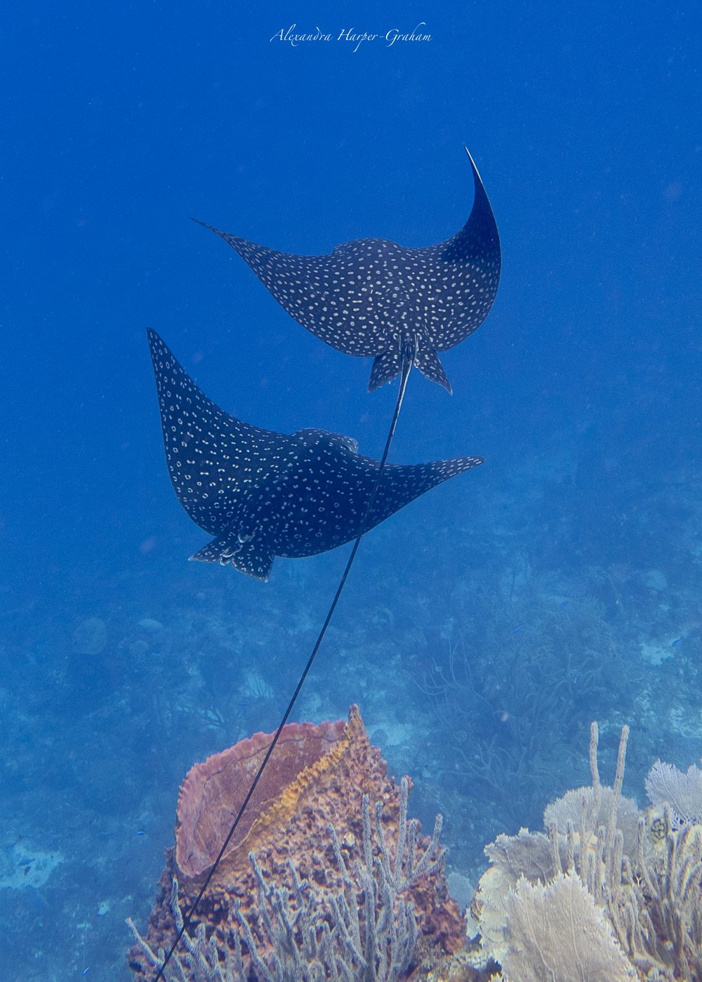 This picture isn't relevant but people like eagle rays