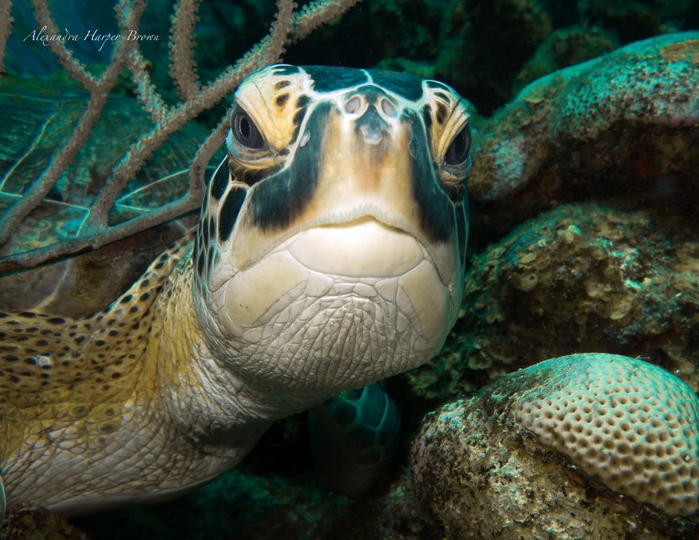 This is our judgement turtle. He is judging you