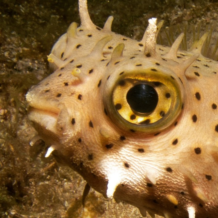 This is our judgemental burrfish, they aren't always judgemental like turtles are but, that final scene really did his head in.