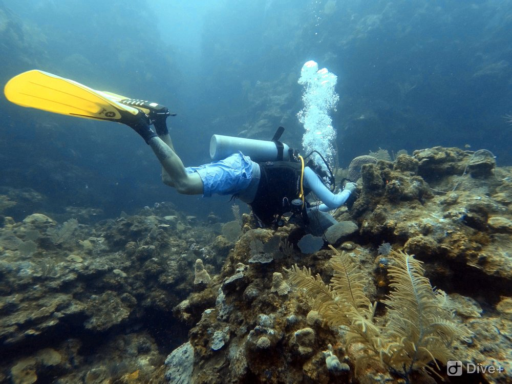 Survey work on the far north side of Roatan near Pristine Bay