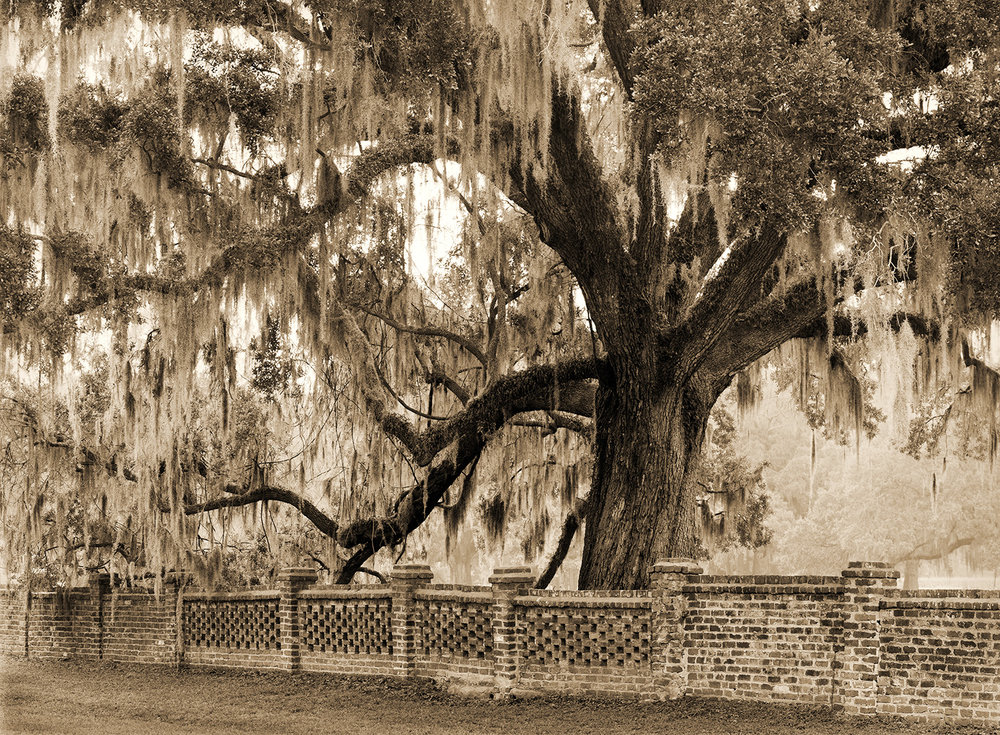 Live Oak and Wall