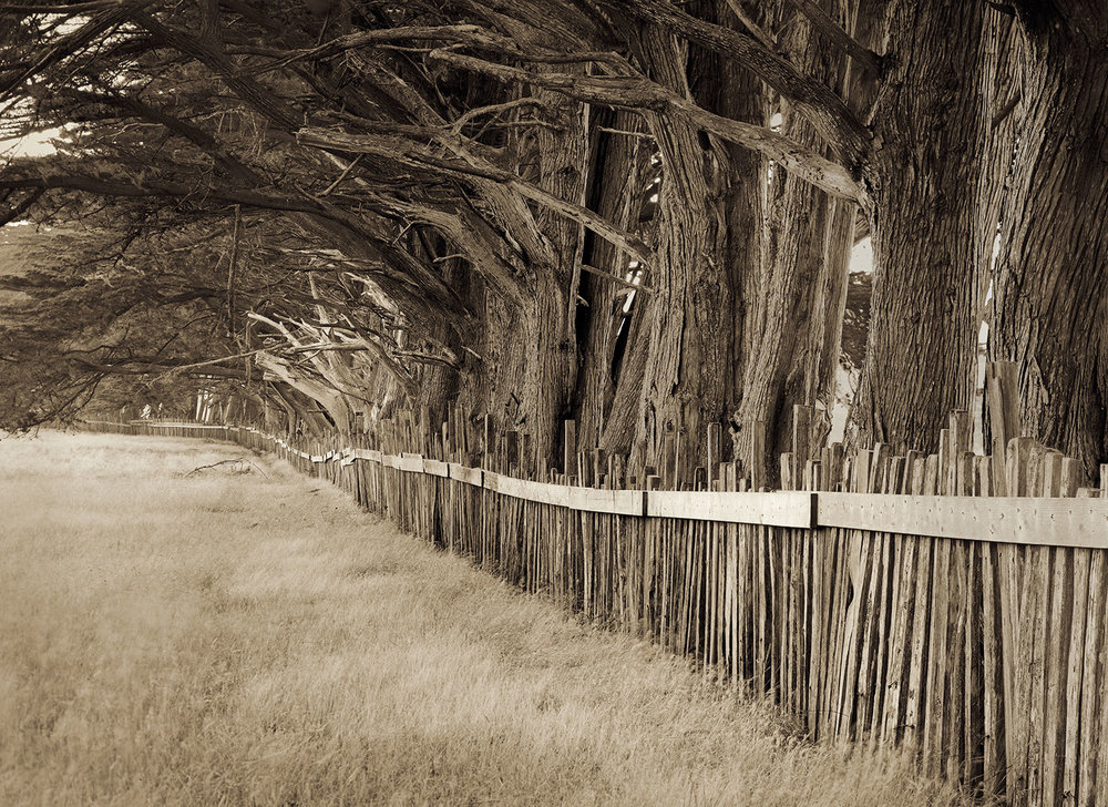 Cypress and Fence
